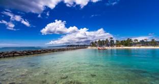 Palm trees on Wakiki beach Oahu Hawaii